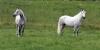Pferdekoppel 2004