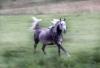 Koppel2004F