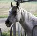 PferdeOffenstallBG
