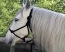 PferdeOffenstallN