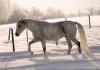 winter2010d
