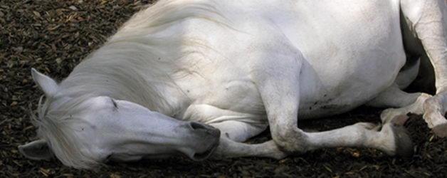 Pferde Offenstall